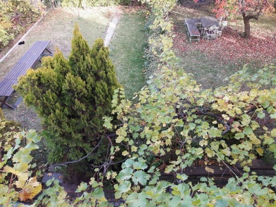 Garden in the Fall with Cat