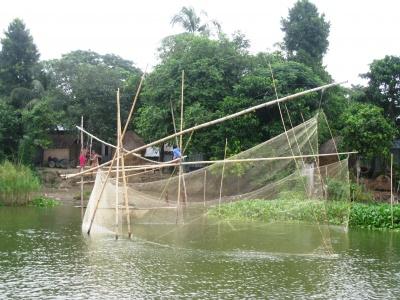 Fishing with beljal (Kishoreganj, Bangladesh)